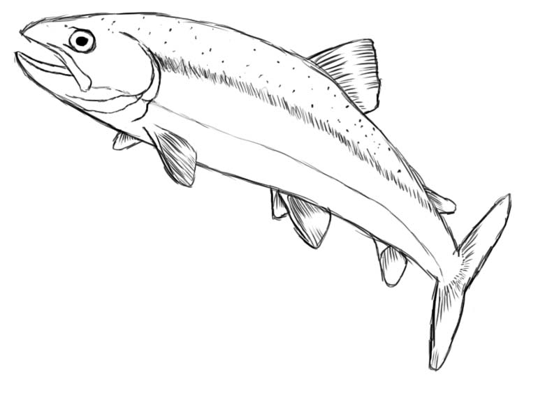 How to draw a fish draw central for Cartoon fish drawing