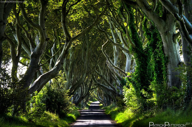 21. The Dark Hedges, an avenue of beech trees south of Ballycastle near Armoy by Patrick Patterson