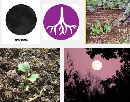 Full Moon Planting