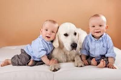 photo bébés jumeaux   avec un chien