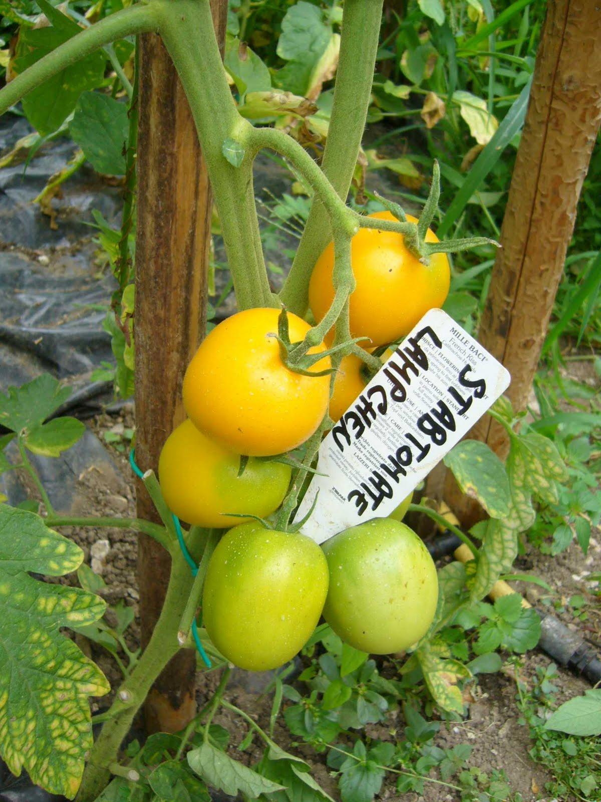 Gruppo coltivare condividendo foto dal museo diffuso for Piantine ortaggi