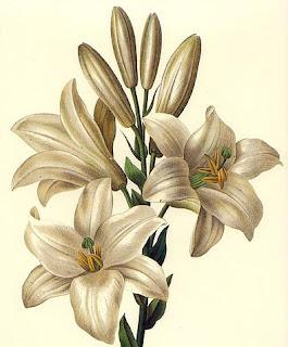 flores vintage ilustración