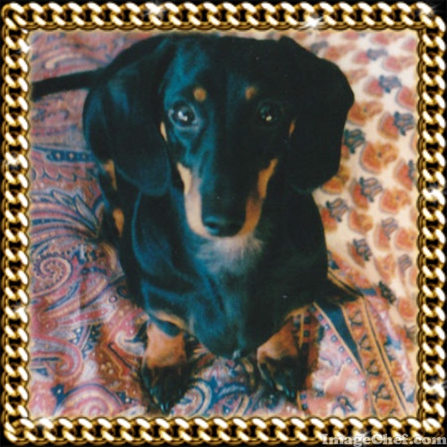Romy  7 anni m. Giugno 2002