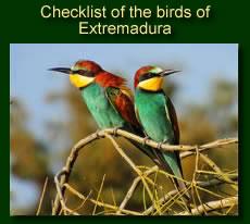 http://www.extremadurabirds.net/Checklist_Birds.pdf