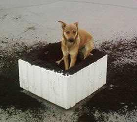 How to Stop Dog from Digging Holes