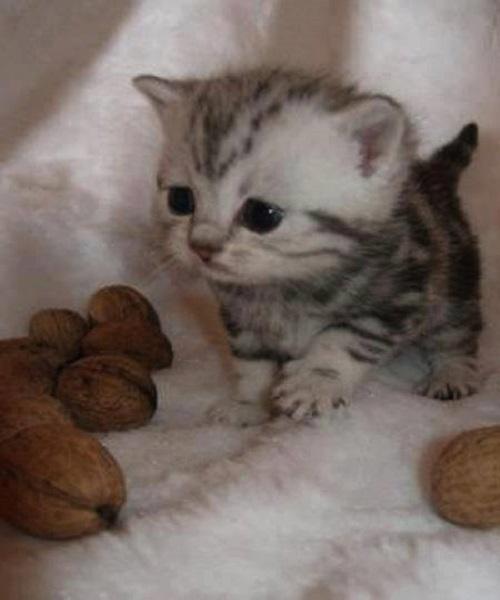 Résultat de recherche d'images pour 'bébé animaux'