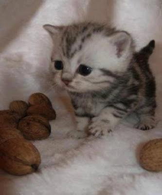 photo bébé animaux trop mignon