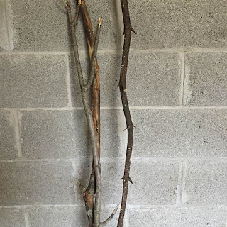 Three tree branches leaning up against a gray cinder block wall.