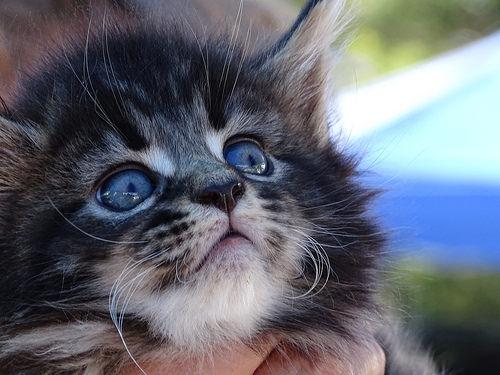Black kitty with pretty big eyes - cutipedia