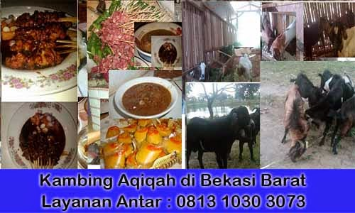 Kambing_Aqiqah_Bekasi_Barat