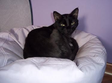 Gato Félix
