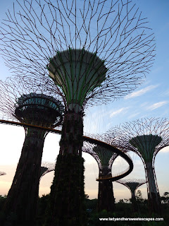 Amazing Super Trees in Gardens by the Bay