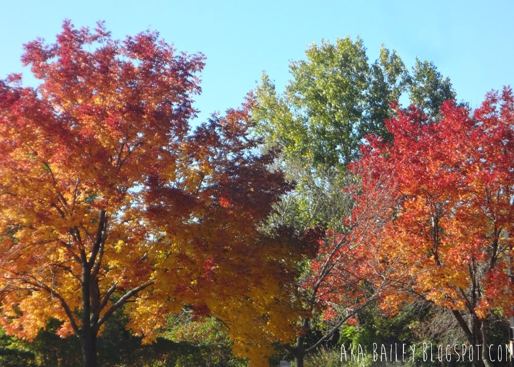 Colorful New England fall foliage