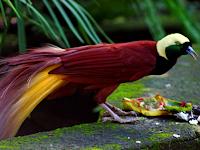 Inilah 17 Jenis Burung Langka Dilindungi di Indonesia