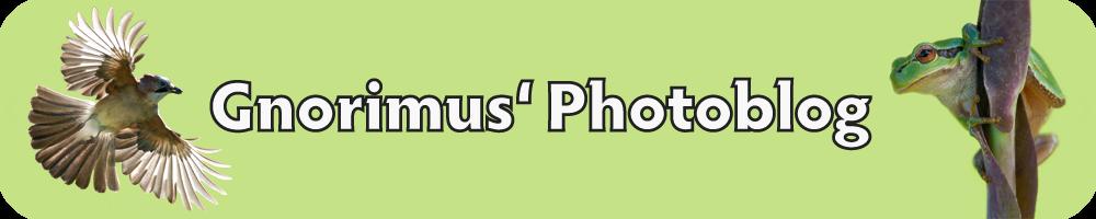 Gnorimus' Photoblog