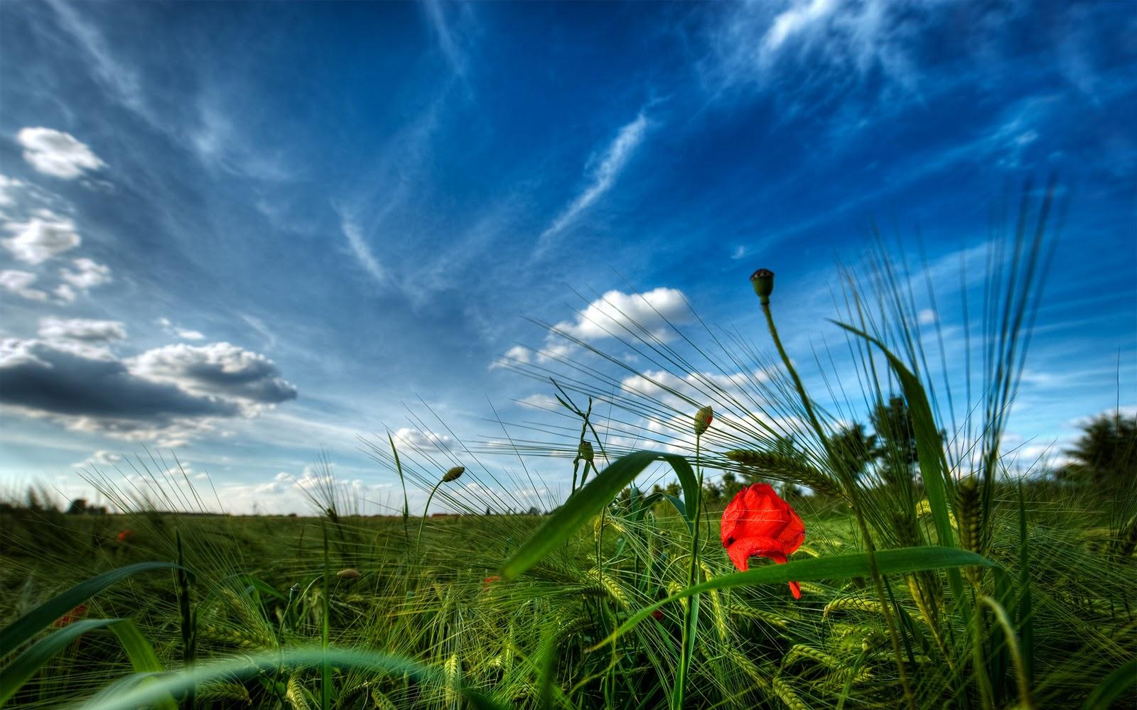 http://4.bp.blogspot.com/-flTtQtQXm9E/UIae3wLPdgI/AAAAAAAAAuU/QKJ-j4_HAkk/s1600/Flower+Field+Nature+HD+Wallpaper+-+FreeHDWall.Blogspot.Com.jpg