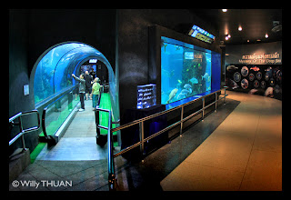 Le tunnel a l'aquarium de Phuket