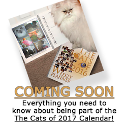 The Cats of 2017 Calendar