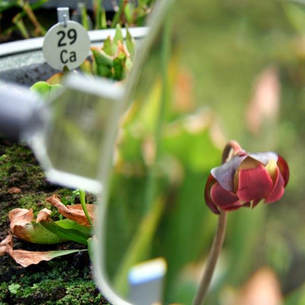 Les jardins botaniques de bordeaux 2 2 rendez vous - Residence les jardins de bordeaux bastide ...