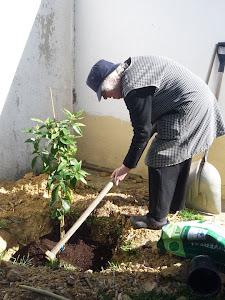 Dia Mundial da Floresta de 2012 ...