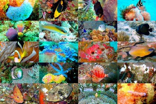 Viaje al fondo del mar I (peces, corales y arrecifes)