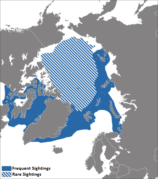 Map showing the distribution of Narwhals