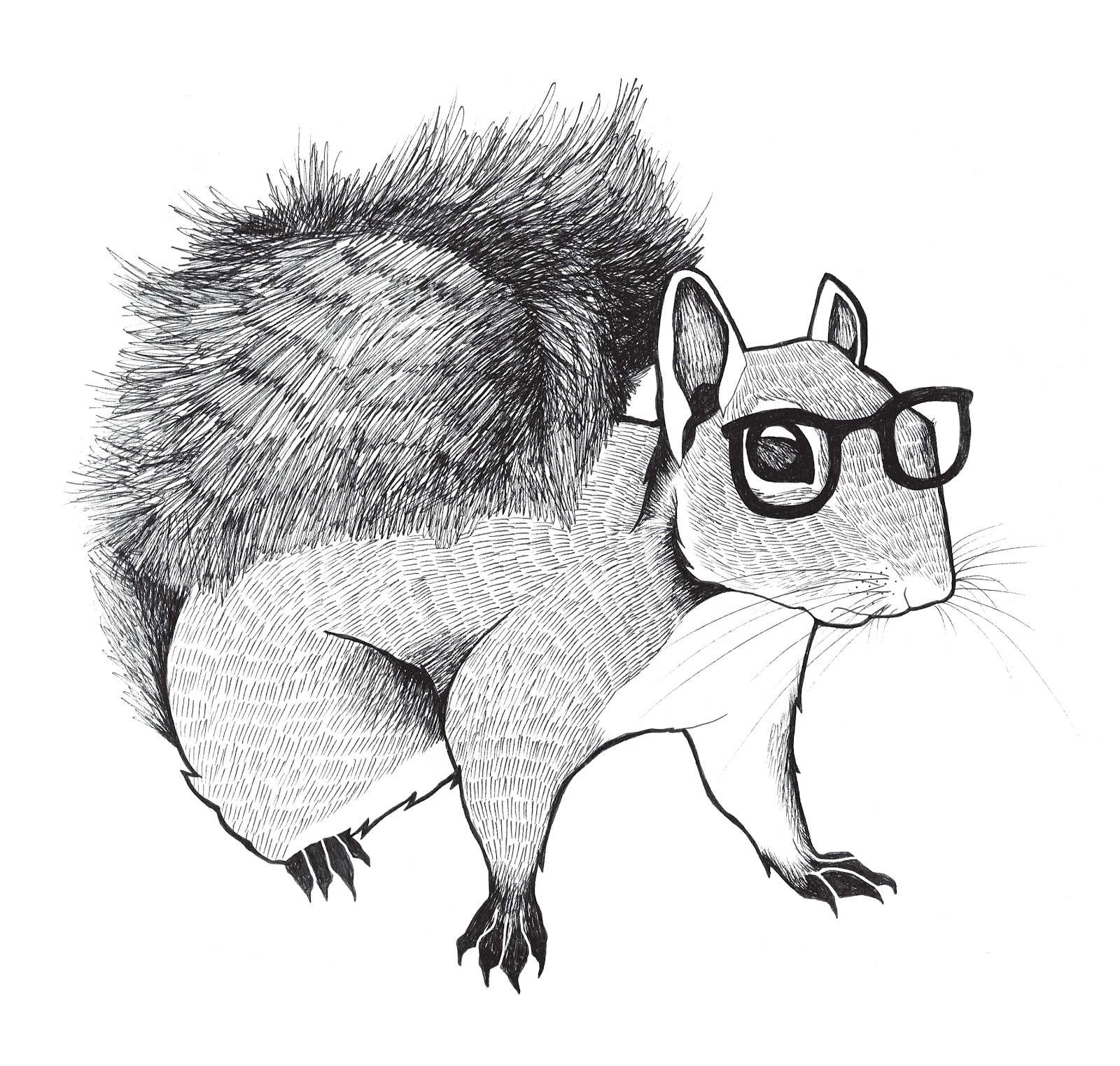 Squirrels with glasses - photo#18