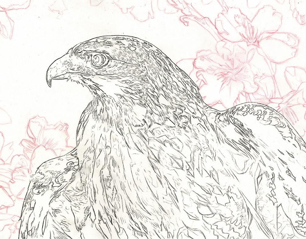 alan hawley illustration red tailed hawk acrylic painting
