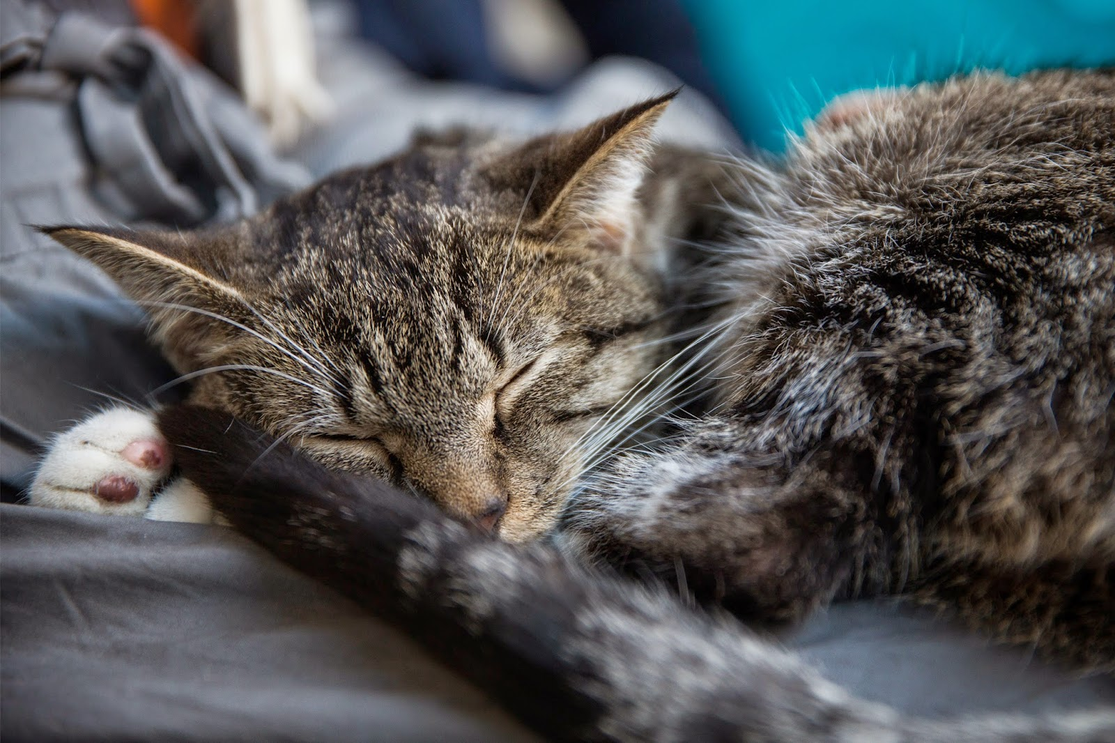 "Pop up ""Cat Cafe"" opens in America"