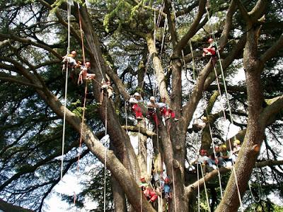 buongiornolink - che cos'è il treeclimbing