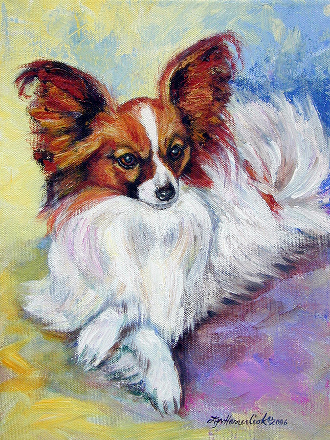 Cute Dogs: Papillon dog Pomeranian Mix