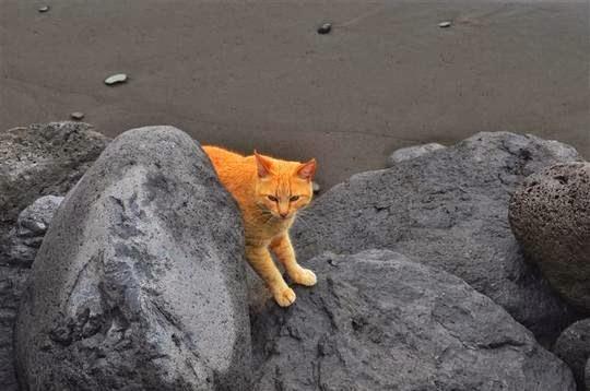 playa gato
