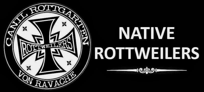 CANIL ROTTGARTEN VON RAVACHE  - NATIVE ROTTWEILERS