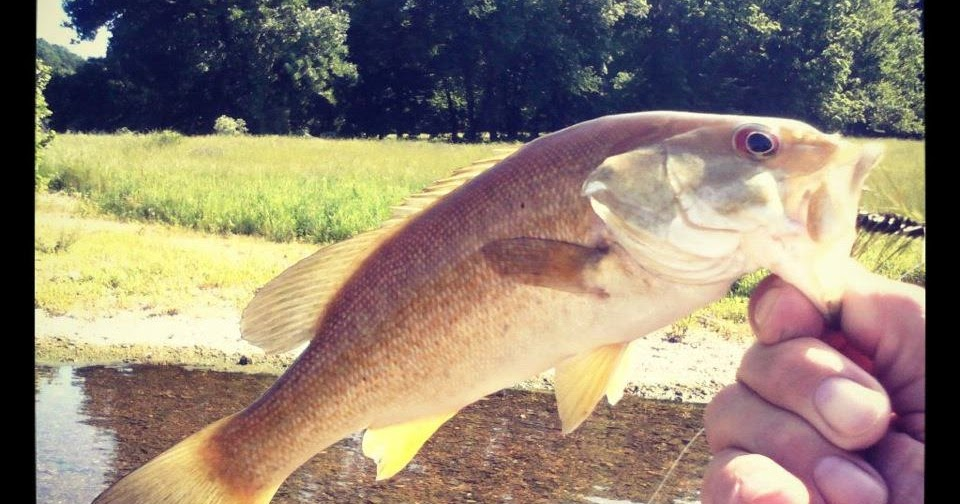 Bugging out warm water fly fishing and tying deep for Deep water bass fishing