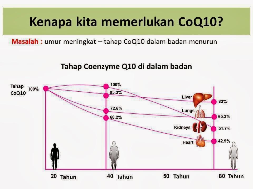 coq10 dalam badan