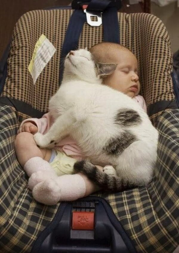 Funny cats - part 95 (40 pics + 10 gifs), cat pictures, cat sleeping with baby