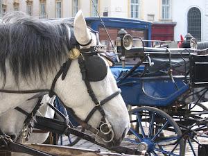 Pferde und,...