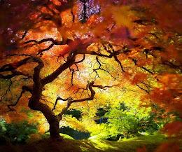 Presentación de Nuestro Bosque Encantado