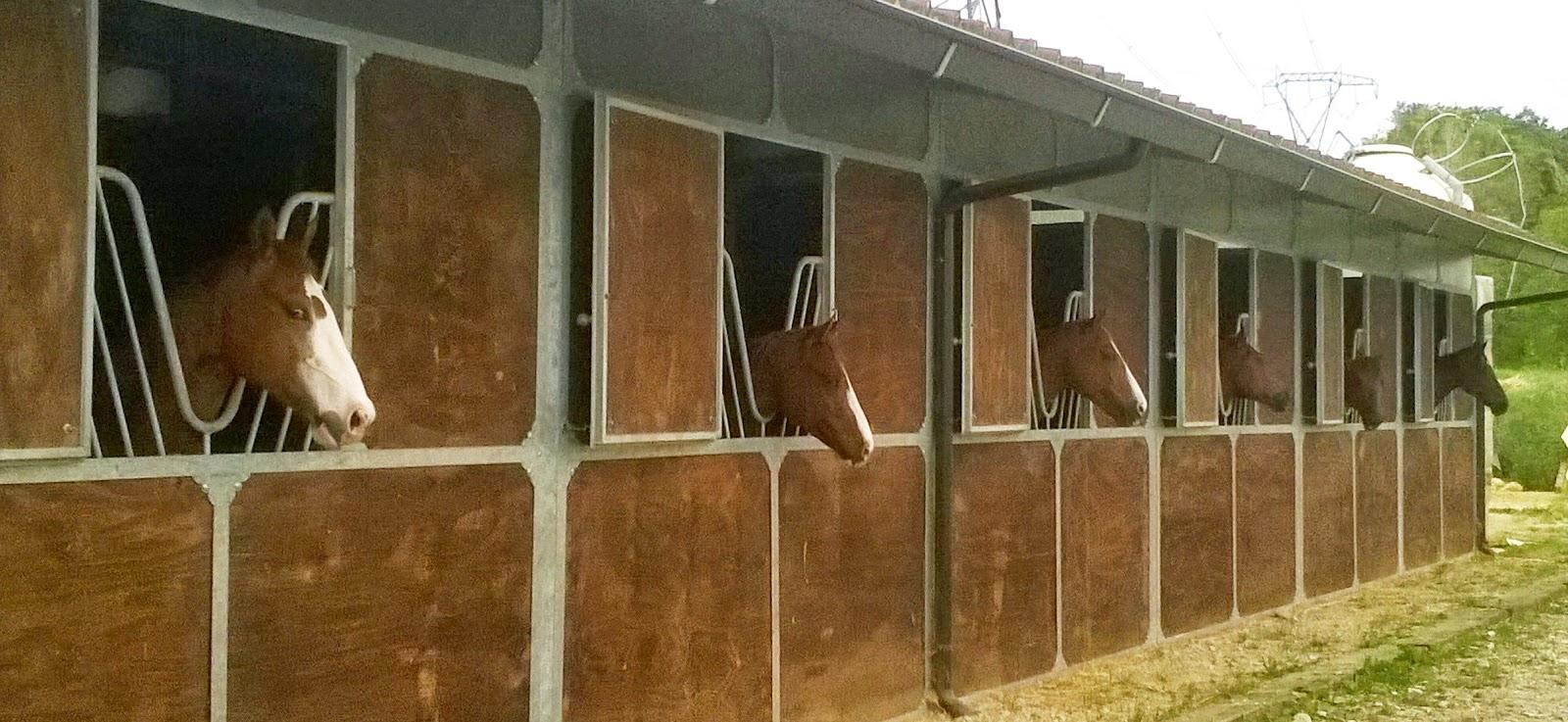 Noceto cavalli affacciati alla finestra amore mio - Jovanotti affacciati alla finestra ...