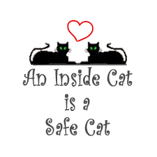 The Safe Cat