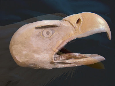 bald eagle head clay sculpture comparison