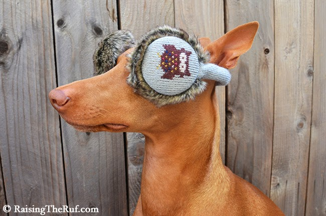 dog owl ear muffs