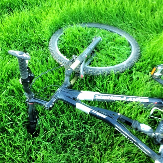 gary fisher sugar mountain bike in green grass