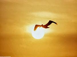 Todo sueño necesita alas