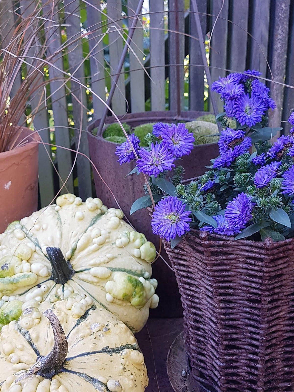Blått är höstens färg.