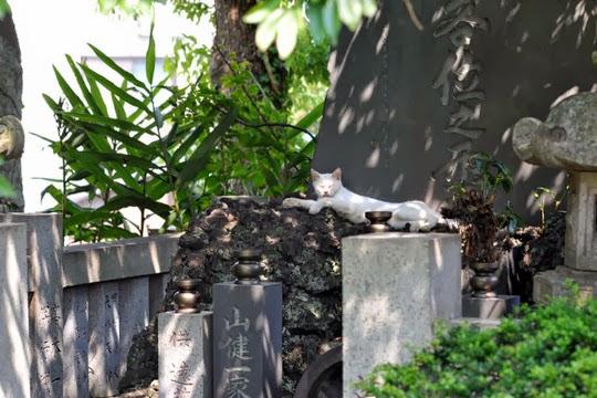Numazu cemetery