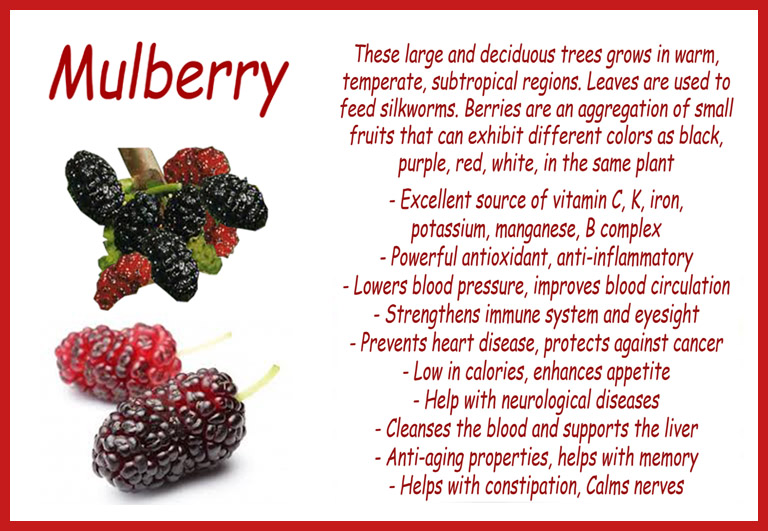 benefits mulberry