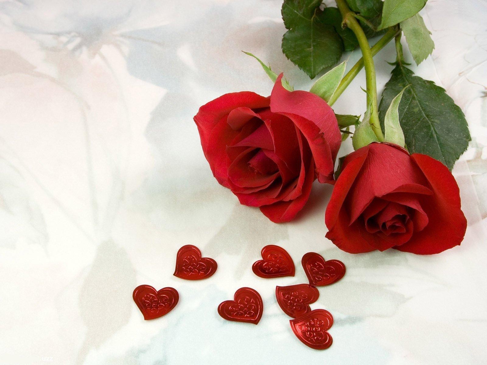 los miembros del gnero cuya variedad es tan extensa que comprende desde rosales miniatura de 10 15 cm de altura hasta grandes arbustos trepadore - Fotos De Rosas Rojas Grandes