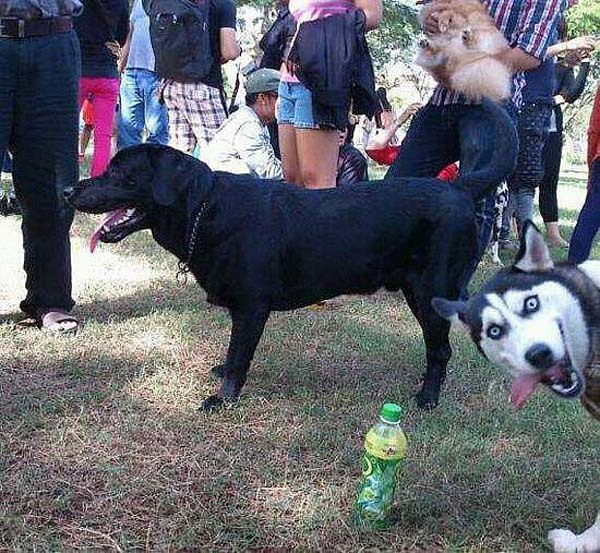 This photobombing dog.