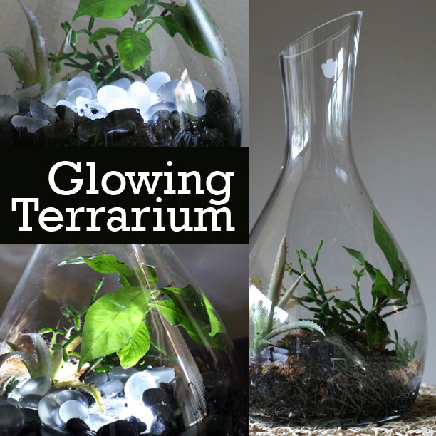 The Rainforest Garden How To Make A Glowing Terrarium